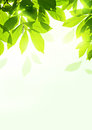 Fresh summer leaves organic background design Stock Image