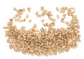 Fresh sunflower seeds Stock Image