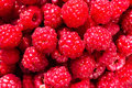 Fresh sweet raspberries close up raspberry fruit background mac macro food Royalty Free Stock Images
