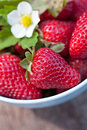 Fresh sweet strawberry strawberries in the bowl selective focus Royalty Free Stock Image