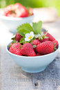 Fresh sweet strawberry strawberries in the bowl selective focus Royalty Free Stock Photography