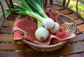 Fresh sweet vidalia onions outdoor closeup still life of on a red plaid dishtowel in a basket Royalty Free Stock Photo