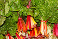 Fresh Swiss Chard at the farmers market Stock Images