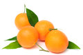 Fresh tangerine Stock Photography