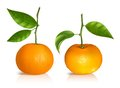 Fresh tangerine fruits with green leaves photo realistic vector illustration Stock Photos