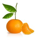 Fresh tangerine fruits with green leaves photo realistic vector illustration and slices Royalty Free Stock Photography