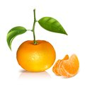 Fresh tangerine fruits with green leaves photo realistic vector illustration and slices Stock Image