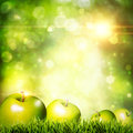 Fresh tasty apple on the grass Stock Images