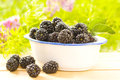 Fresh and tasty blackberries Stock Photos