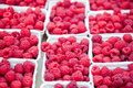 Fresh tasty pink raspberry closeup macro on market outdoor summer Royalty Free Stock Image