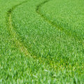 Fresh thick grass Royalty Free Stock Images