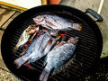 Fresh Tilapia Fish on the Grill
