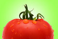 Fresh  tomato against gradient Royalty Free Stock Image
