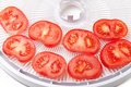 Fresh tomato on food dehydrator tray ready to dry white background Royalty Free Stock Images