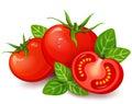Fresh tomatoes with basil on white background Royalty Free Stock Photo