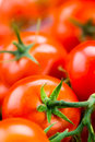 Fresh tomatoes food background macro vegetables Royalty Free Stock Images