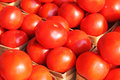 Fresh tomatoes organic at the farmers market Royalty Free Stock Images