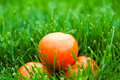 Fresh tomatos laying on green grass Stock Photo