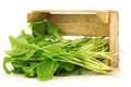 Fresh turnip tops (turnip greens) Royalty Free Stock Photography