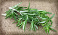 Fresh twigs of rosemary Stock Images