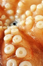 Fresh uncooked octopus, closeup Royalty Free Stock Photo