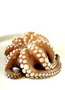 Fresh uncooked octopus in a plate Stock Photography