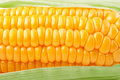 Fresh vegetable corn texture Stock Images