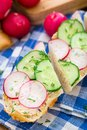 Fresh vegetable sandwich with radish and cucumber Royalty Free Stock Image