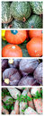 Fresh Vegetables (Dry Brush) Royalty Free Stock Photography