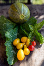 Fresh vegetables harvested from the eco garden Royalty Free Stock Photo