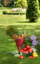 Fresh vegetables and plants Stock Photography