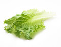 fresh vegetables (salad, lettuce) Royalty Free Stock Photo