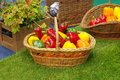 Fresh vegetables in basket: colored bell peppers Royalty Free Stock Photo