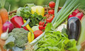Fresh vegetables in a wicker basket Royalty Free Stock Image