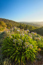 Fresh view beautiful of the adelaide hills Royalty Free Stock Images