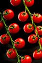 Fresh Vine Cherry Tomatoes Royalty Free Stock Photo