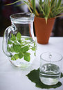 Fresh water with lemon balm and mint leaf Royalty Free Stock Image