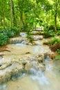 Cascading stream flowing through a rain forest landscape.