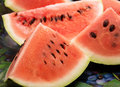 Fresh watermelon closeup of slices Stock Photos