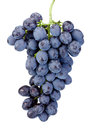 Fresh wet blue grapes isolated on white background Royalty Free Stock Photo