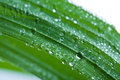 Fresh wet grass background Royalty Free Stock Photo