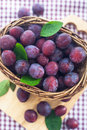 Fresh wet purple plums in a basket on the wooden board and checkered tablecloth background Royalty Free Stock Photography