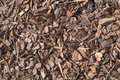 Fresh wet wood chip from pine tree, nature texture Royalty Free Stock Photo
