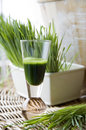 Fresh wheatgrass with wheatgrass juice Royalty Free Stock Photo
