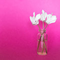 Fresh white flowers in small bottle on a pink background Royalty Free Stock Photo