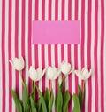 Fresh white tulips on pink