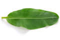 Fresh whole banana leaf Royalty Free Stock Photo