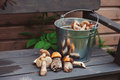 Fresh wild edible orange and brown cap boletus mushrooms gathered in can Royalty Free Stock Photo