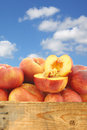 Fresh wild flat nectarines and a cut one in wooden crate against blue sky with clouds Royalty Free Stock Photo