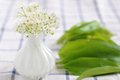 Fresh wild garlic leaves with flowers Stock Photography